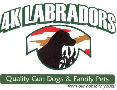4K Labradors