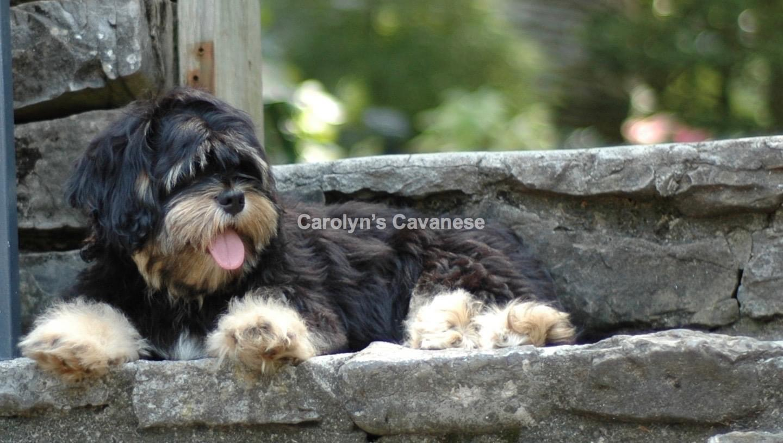 Carolyn's Cavanese