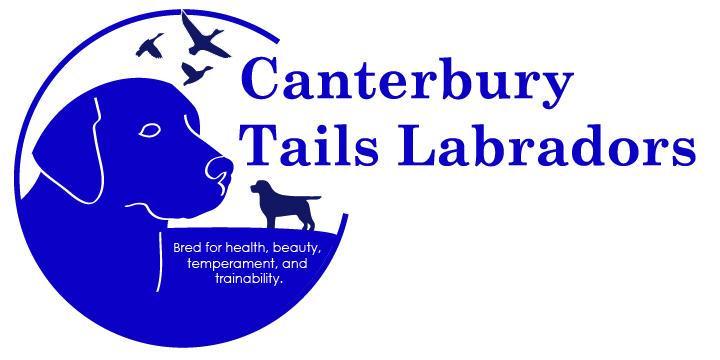 Canterbury Tails Labradors