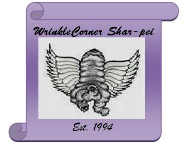 Wrinklecorner Shar-pei