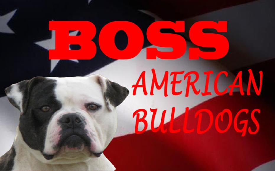 Boss American Bulldogs