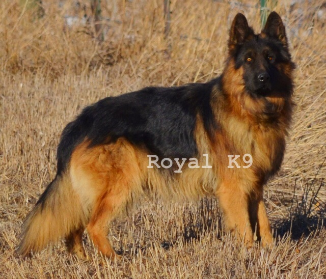 Royal K9 Kennel, LLC