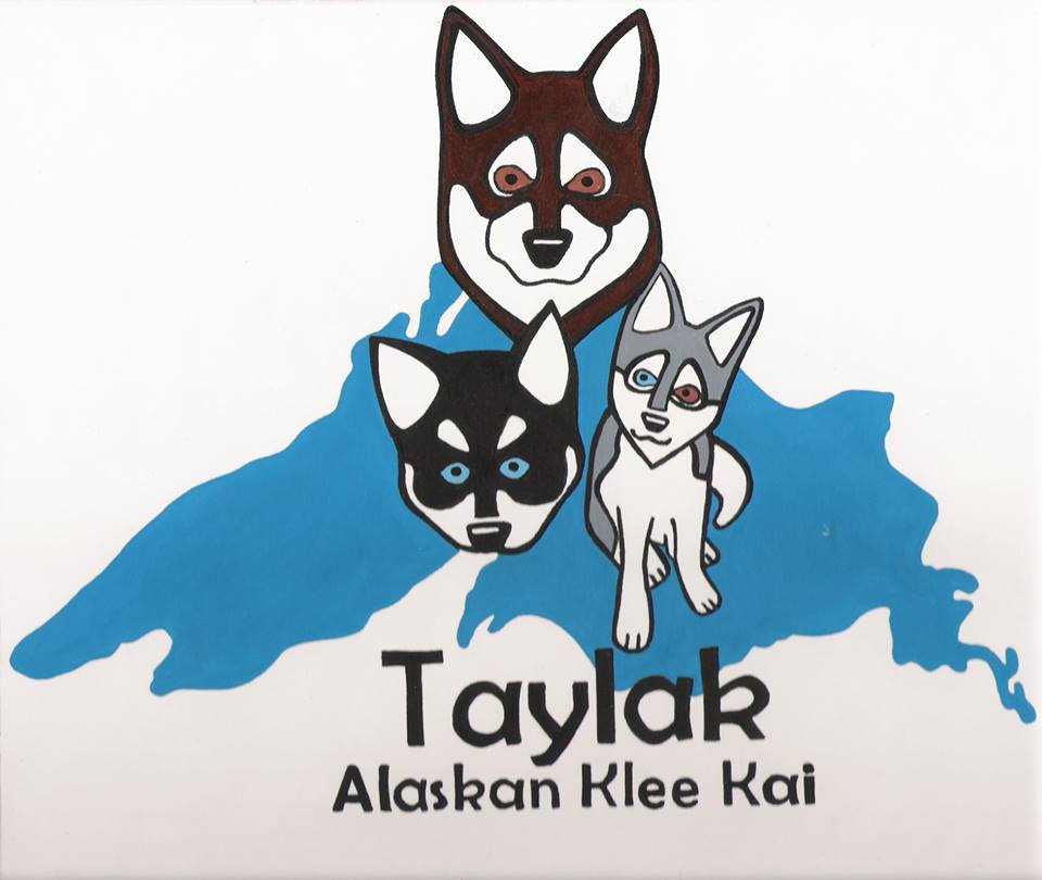 Taylak Alaskan Klee Kai