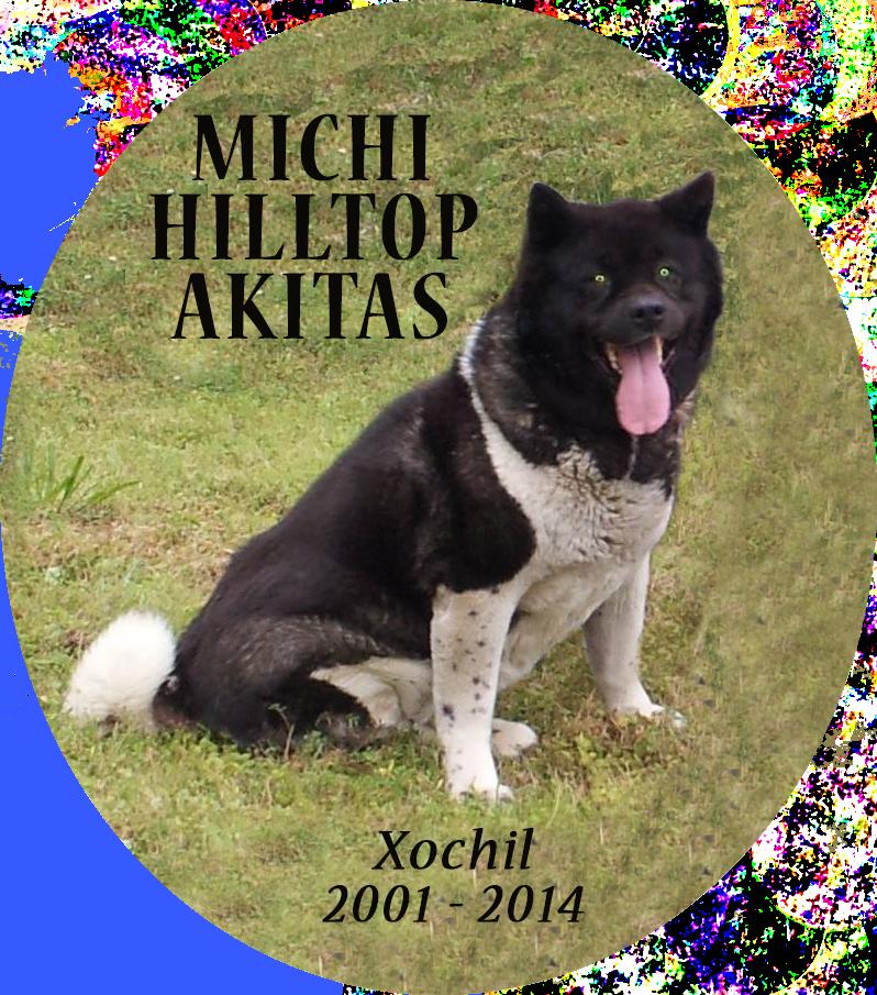 Michi Akitas