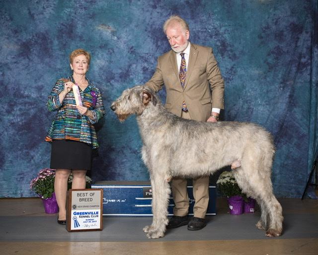 Glencairn Irish Wolfhounds