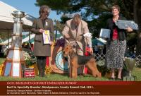 Woodside Airedales