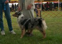 Bellakona Australian Shepherds