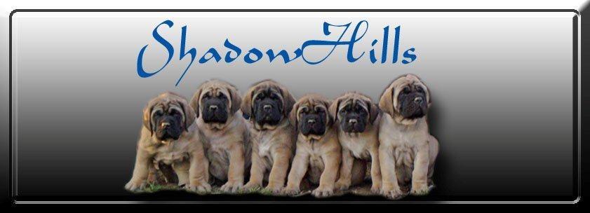 ShadowHills Mastiff