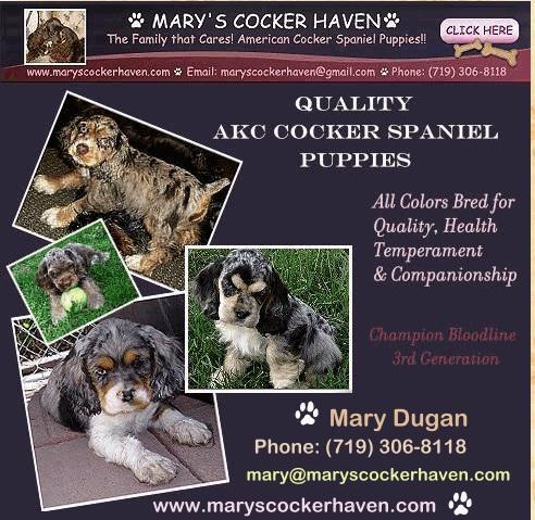 Mary\'s Cockers