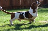 Carters Hound Dog Ranch