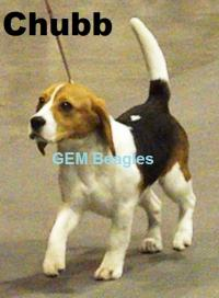 Gem Beagles