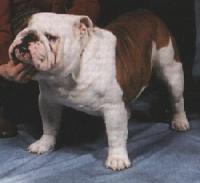 Rosborough Bulldogs