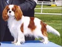 Dynasty Bulldog