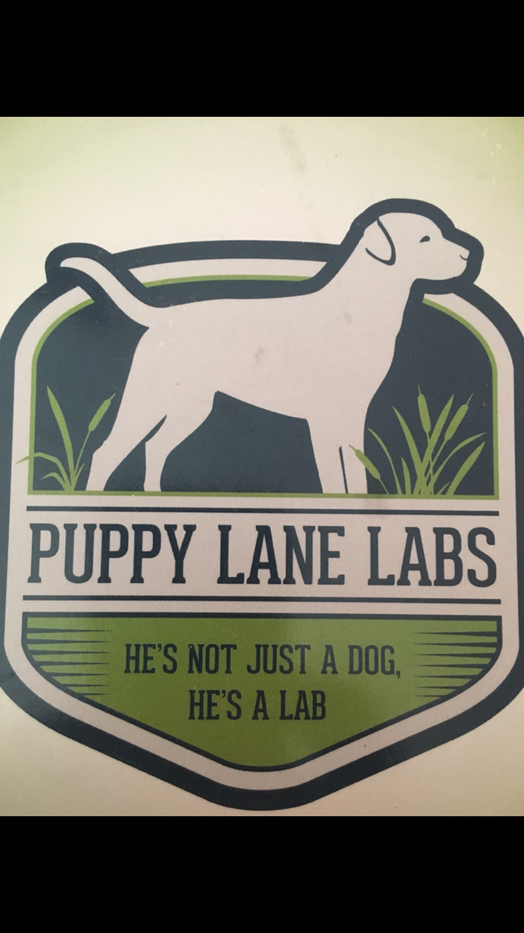 Puppy Lane Labs