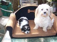 Marros Fancy Dog Ranch
