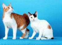 Cat-Chi Cats