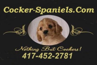 Cocker-Spaniels.com
