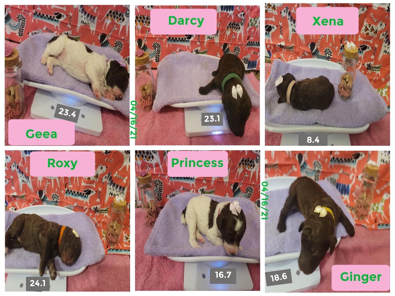 Breeder Uploaded Picture