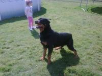Arnold Family Rottweilers