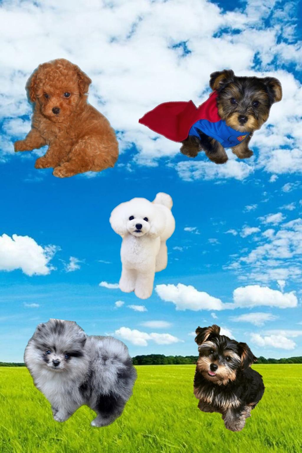 Heaven Sent Puppies