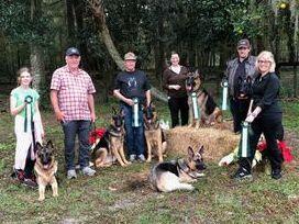 Appleridge German Shepherds