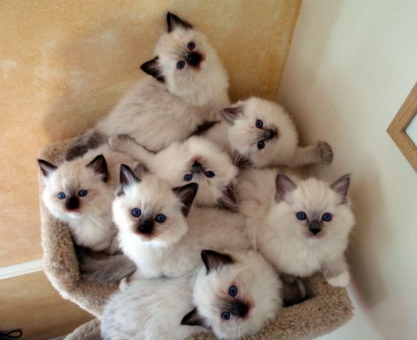 Ohemgee Cattery