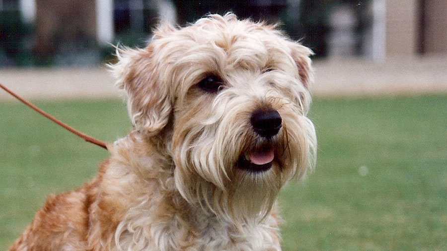 Lucas Terrier picture